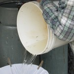 picture of filtering sap