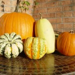 picture of squash and pumpkins